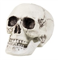 Skull Maxilla Halloween movable jaw