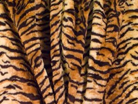Fur tiger 150 cm wide
