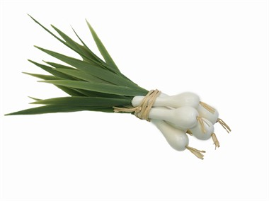 Bouquet of onions